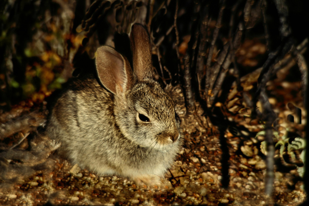Bunny-Rabbit.jpg
