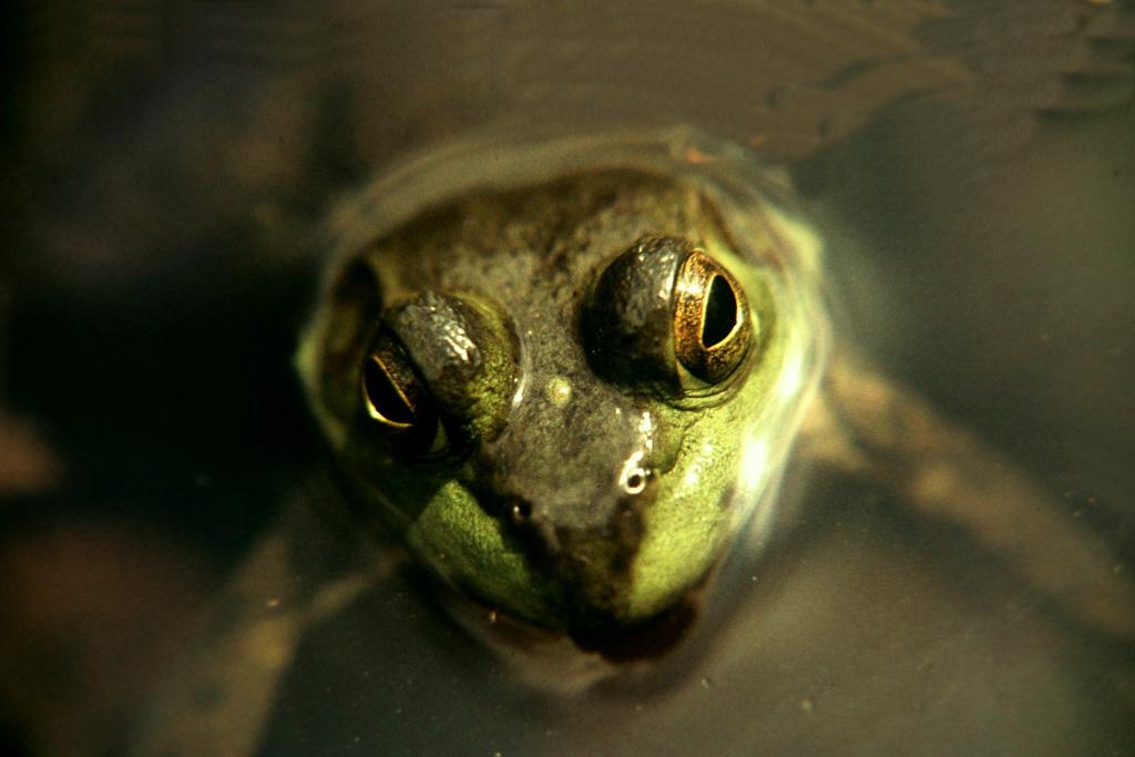 Frog-Eyes.jpg
