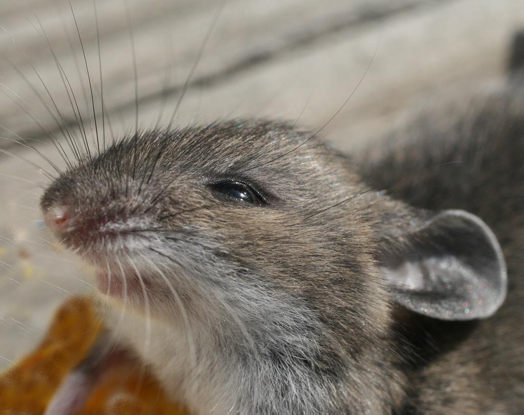 Mouse--1.jpg