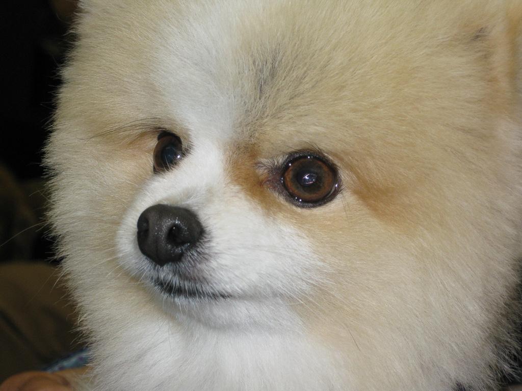 Puppy-Dog.jpg