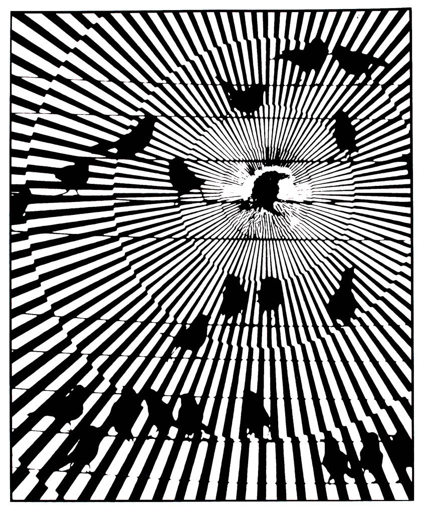 Zoom-Birds--2.jpg