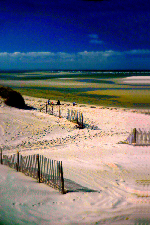 Sand-Fences-At-Low-Tide.jpg