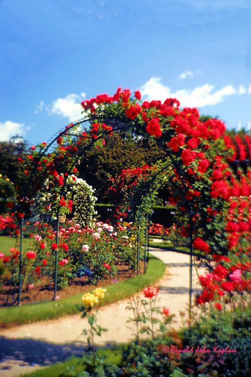 Rose-Garden-2.jpg