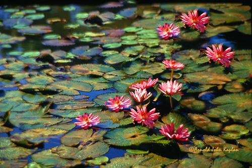 Water-Flowers.jpg