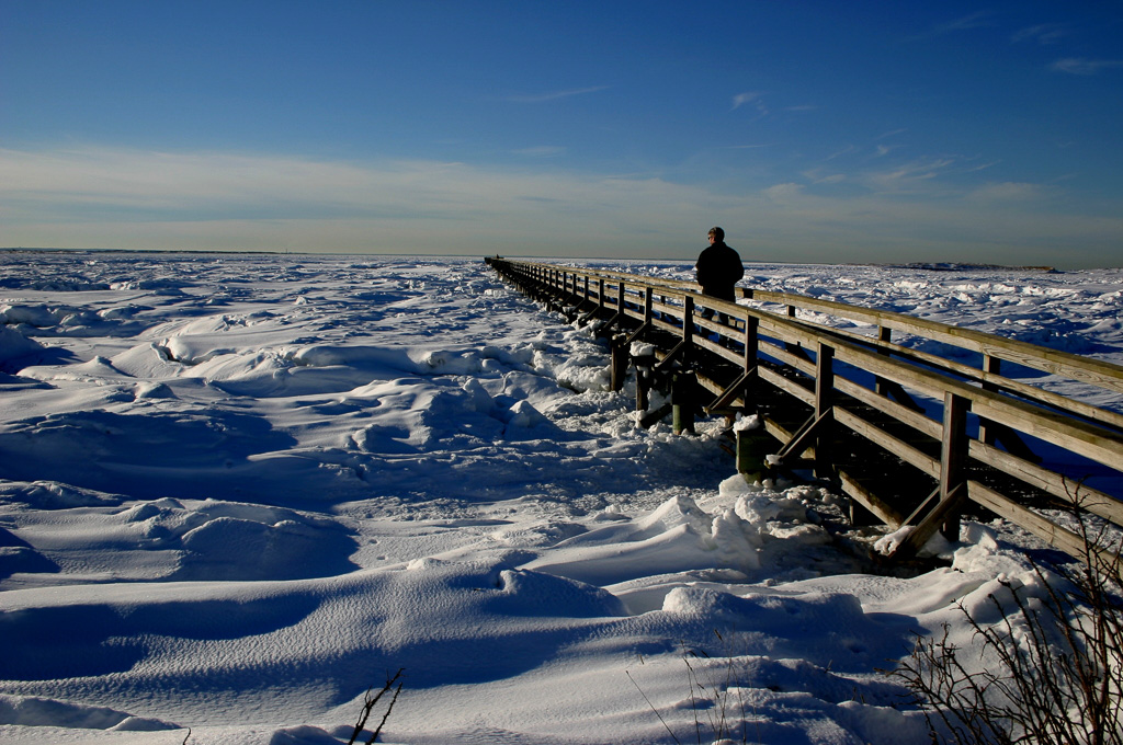 Boardwalk-At-Bass-Hole-Cape-Cod.jpg