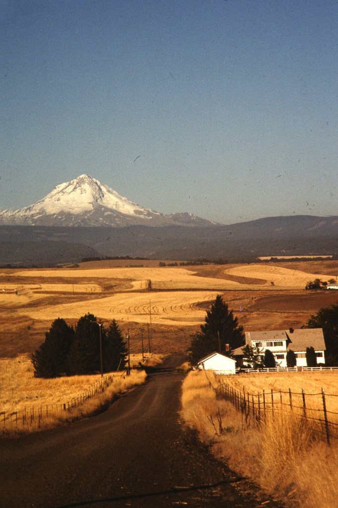 X-Mt-Hood-And-Wheat-Fields--2.jpg