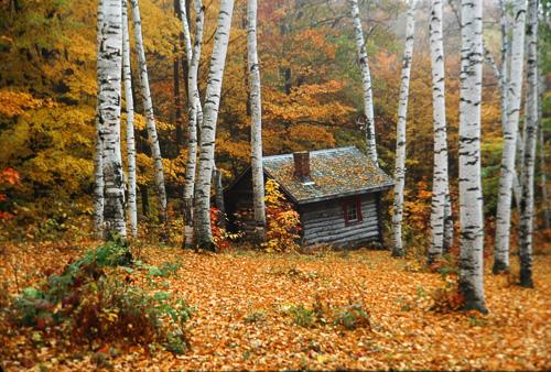 Cabin-In-Birches.jpg