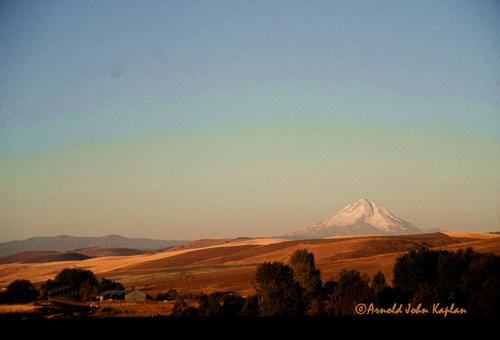 Mt-Hood-And-Wheat-Fields--3.jpg