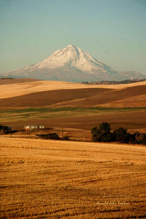 Mt-Hood-and-Wheat-Fields_0018-300dpi.jpg