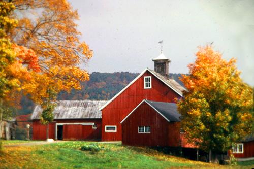 Red-Barns--2.jpg