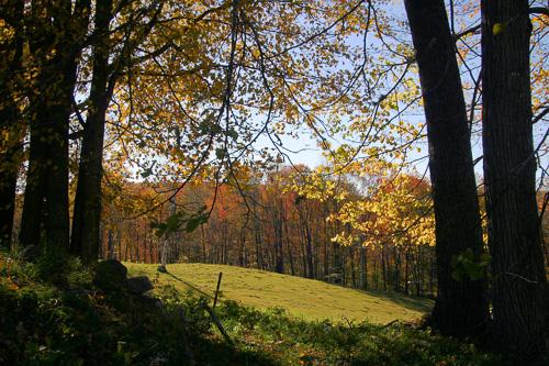 Vt-Foliage-Scene.jpg
