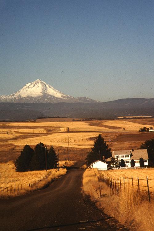 X-Mt-Hood-And-Wheat-Fields--2.jpg