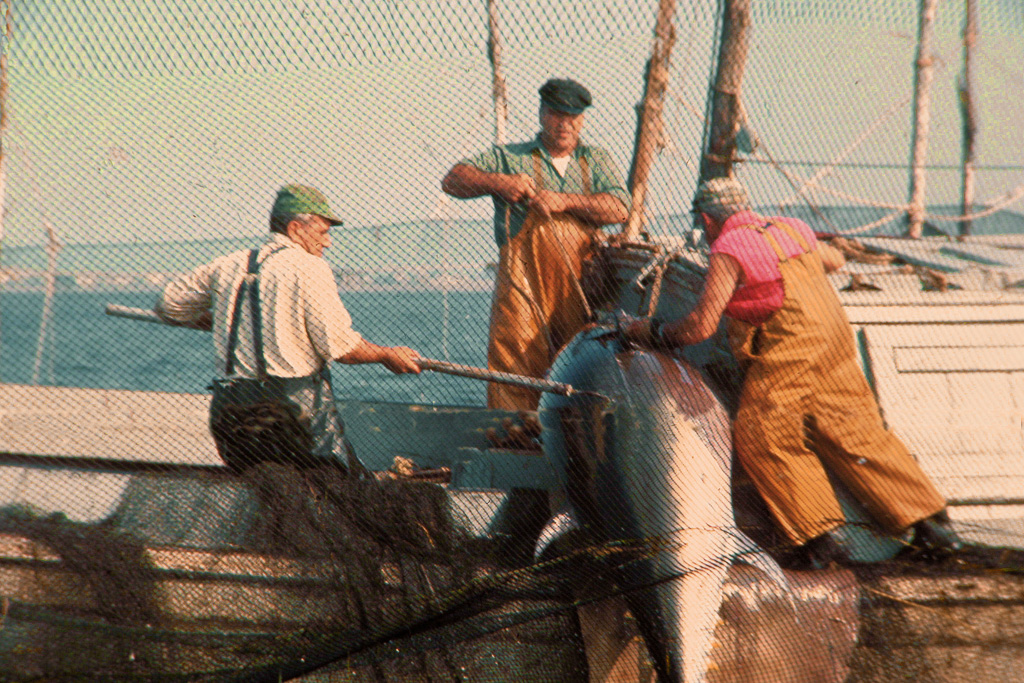 Tuna-Catch.jpg