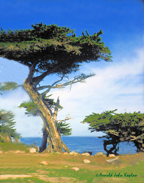 -Cypress-Tree.jpg