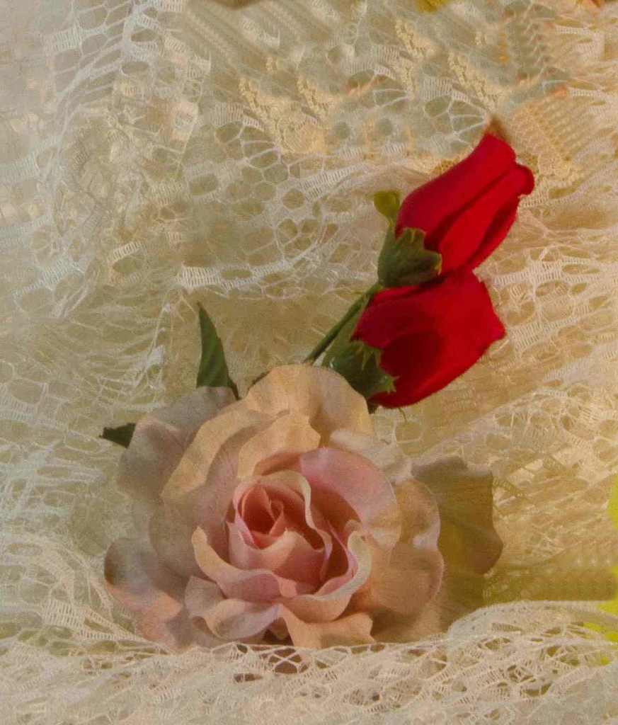 Pink-And-Red-Roses.jpg