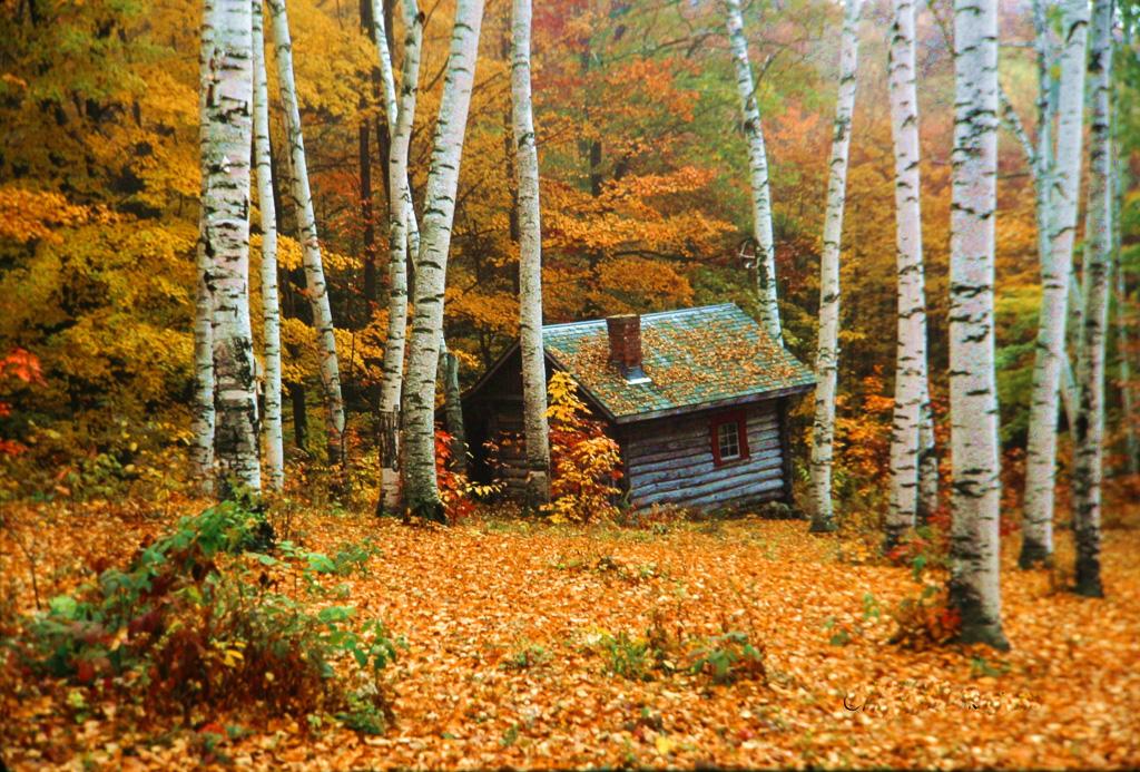 Cabin-In-The-Birches.jpg
