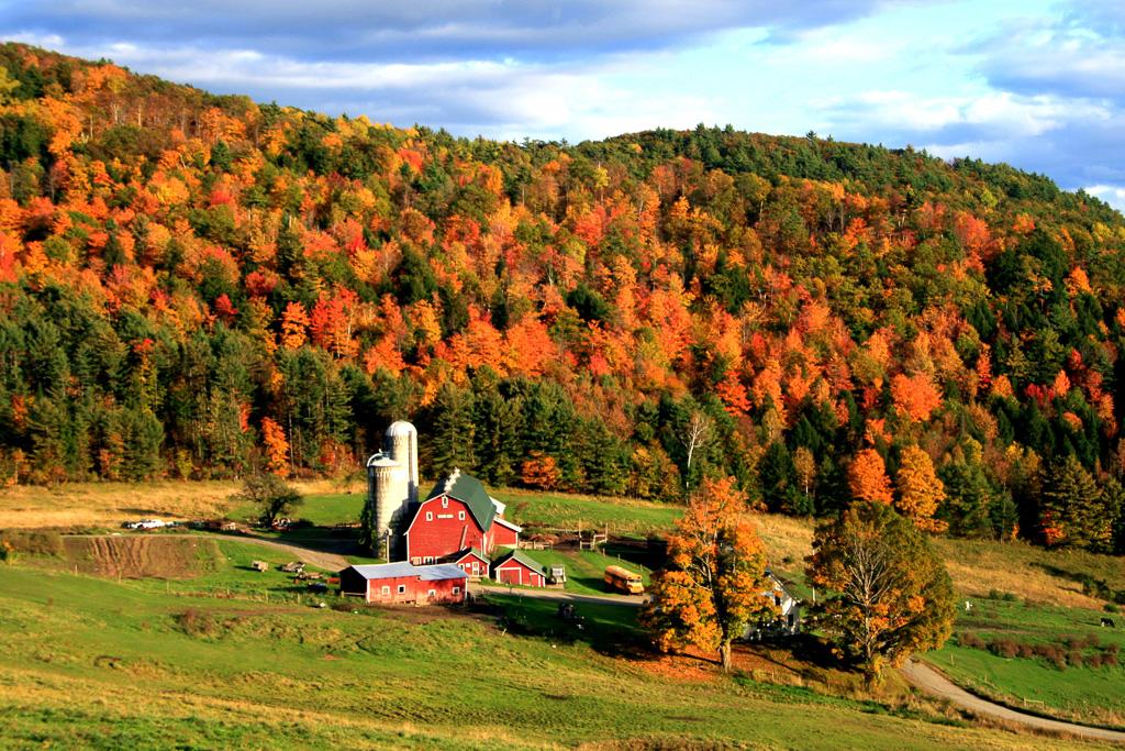 Hillside-Acres-Farm--2.jpg