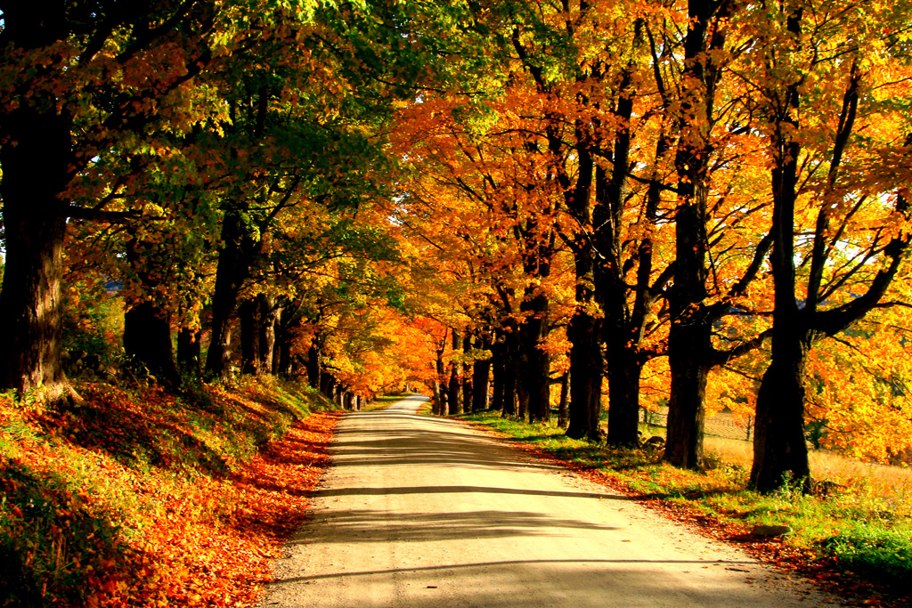 Maple-Hill-Road--2.jpg