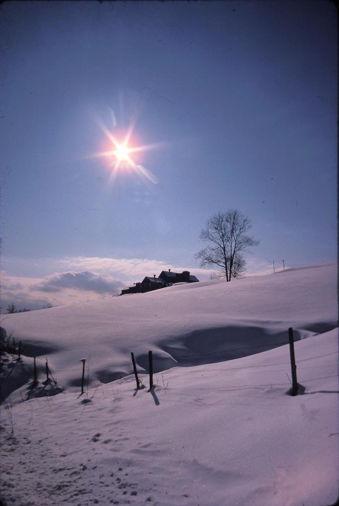 Vermont-Sunstar-at-Henderson-FArm.jpg