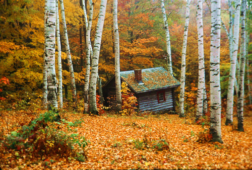 Cabin-In-The-Birches.jpg
