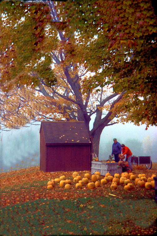 Pumpkin-Farm.jpg